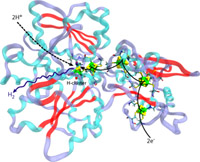 The CpI hydrogenase from Clostridium pasteurianum, which catalyzes the production of H2 gas at its buried H-cluster. The H2 gas is created from H+ ions from water and from electrons from an electron carrier.